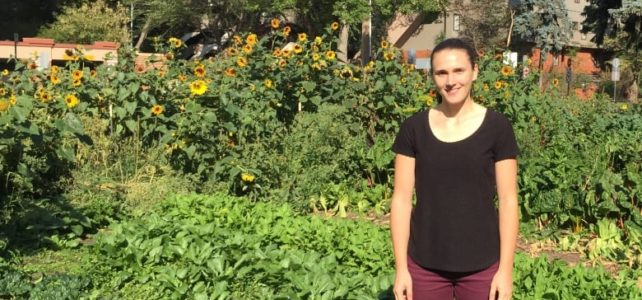 """""""Edmonton groups fight hunger with local food"""" – CBC News"""